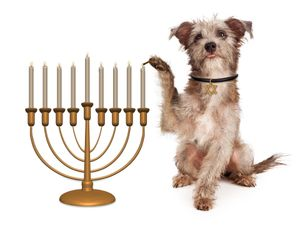 Dogs Are Bad And Owners Are 'Accursed,' Israeli Orthodox Rabbis Rule