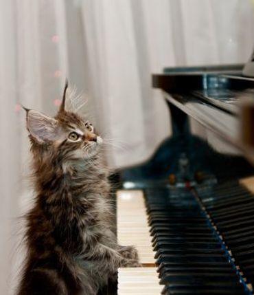 Ketzel,' (Feline) Musical Genius, Dies at 19 – The Forward