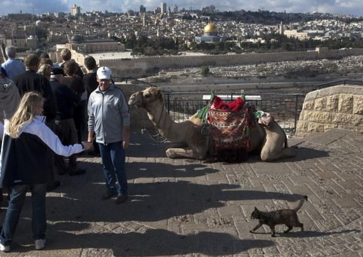 The 5 Weirdest Israel Animal-Related Conspiracy Theories Out There by the Forward